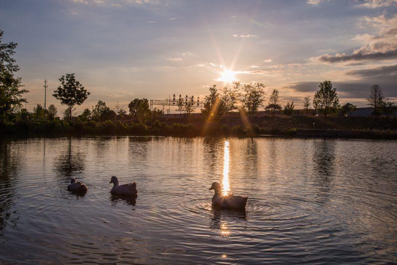 180423 Diva Ducks at Railroad Park IMG_1513 S