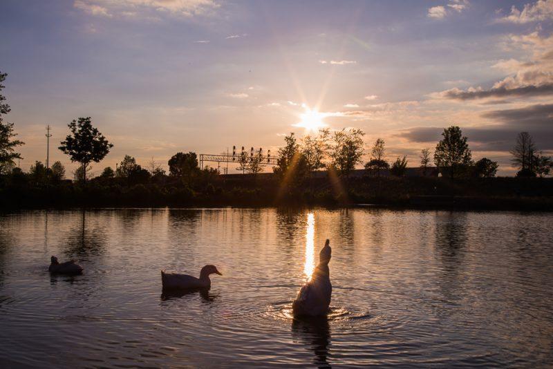 180423 Diva Ducks at Railroad Park IMG_1522 S