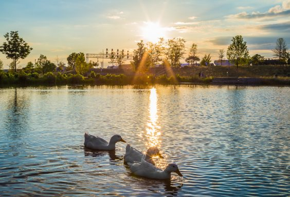 180423-Diva-Ducks-at-Railroad-Park-IMG_1537 S