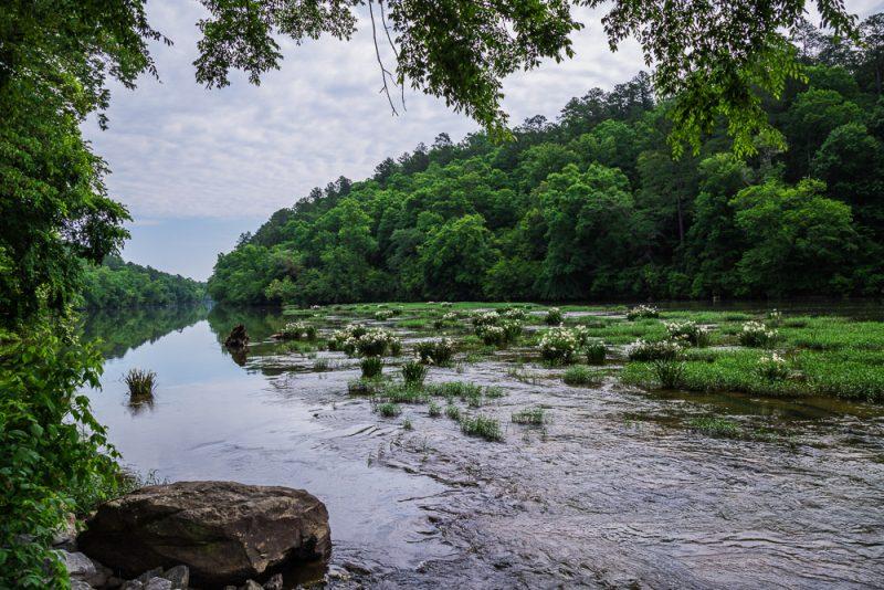180524 Cahaba River NWR IMG_8929 s