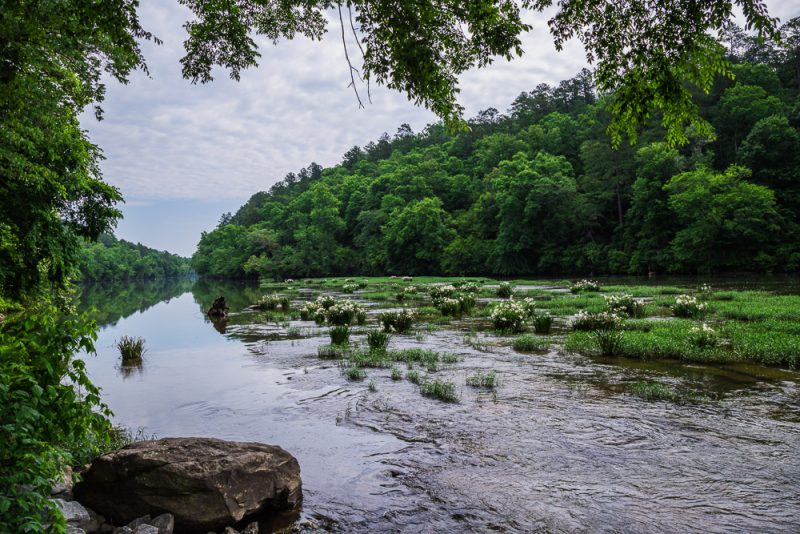 180524 Cahaba River NWR IMG_8937 s