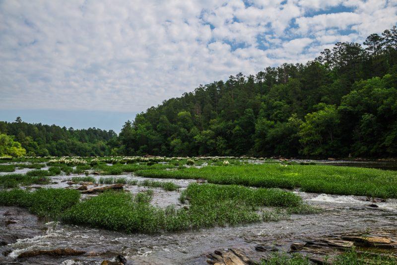 180524 Cahaba River NWR IMG_8958 s