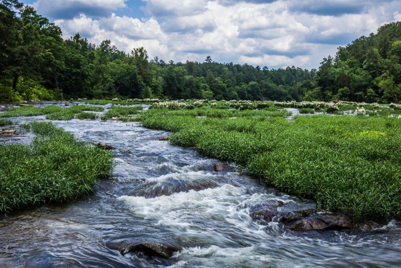 180524 Cahaba River NWR IMG_9761 s