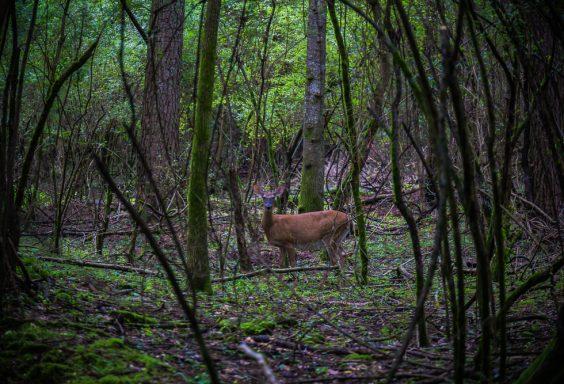 180528 Hike Finds at Joe Wheeler IMG_1505 s