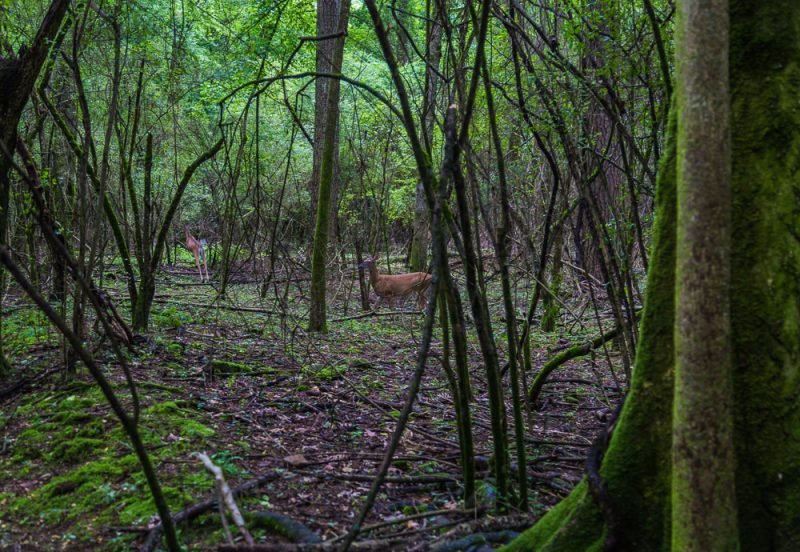 180528 Hike Finds at Joe Wheeler IMG_1510 s
