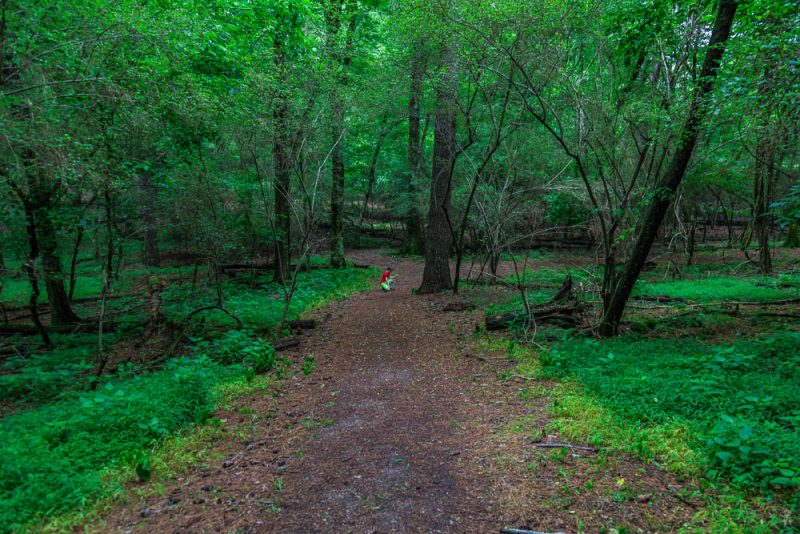 180528 Hike Finds at Joe Wheeler IMG_1531 s