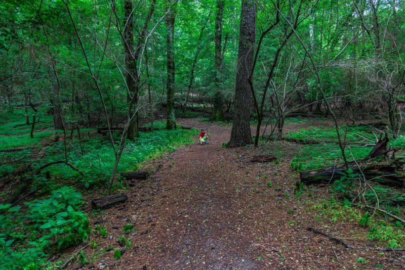 180528 Hike Finds at Joe Wheeler IMG_1537 s