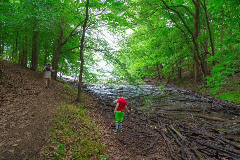 180528 Hike Finds at Joe Wheeler IMG_1547 s