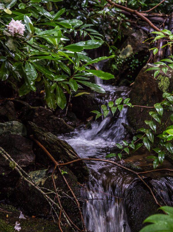 180630 Blue Ridge Mountains IMG_8551 small