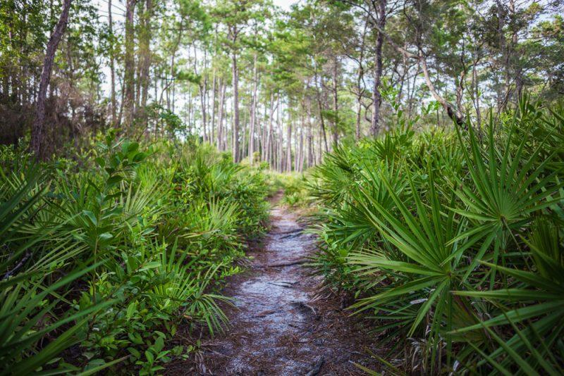 180731 Longleaf Greenway Trail Point Washington State Forest Florida IMG_1091 s