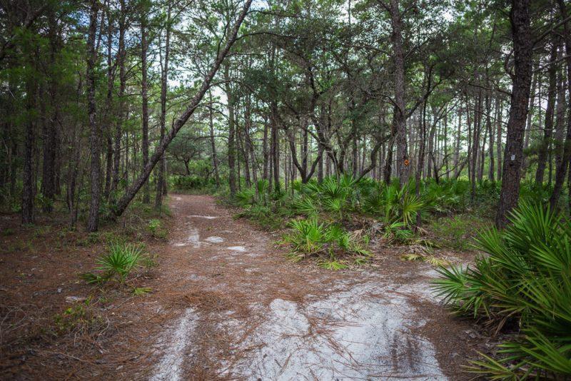 180731 Longleaf Greenway Trail Point Washington State Forest Florida IMG_1093 s
