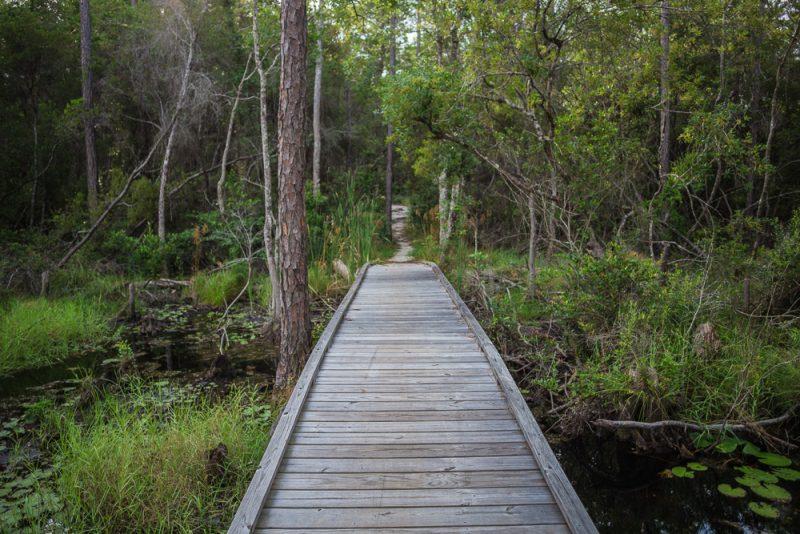 180731 Longleaf Greenway Trail Point Washington State Forest Florida IMG_1114 s