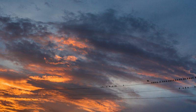 180809-skywatcher-birds-IMG_2211 s