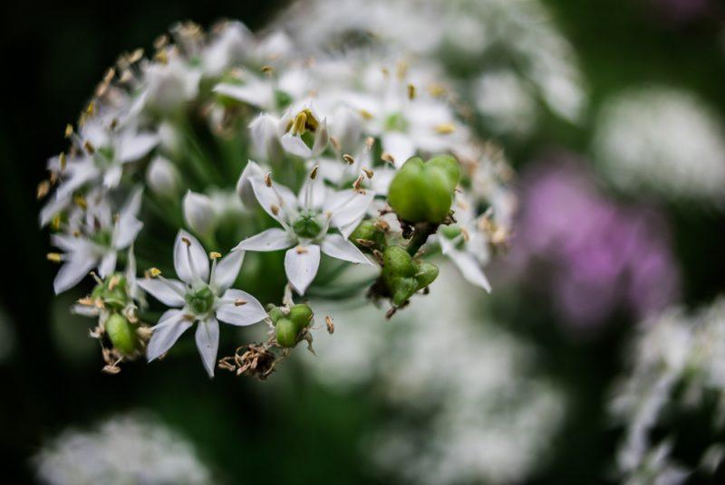 180820 Gramamma's Flowers IMG_2961 s