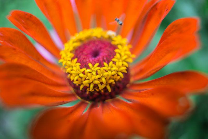 180820 Gramamma's Flowers IMG_2970 s