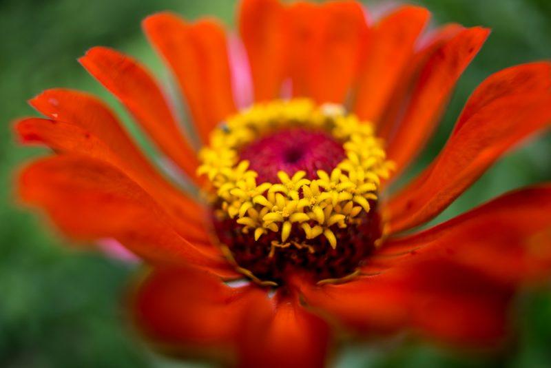 180820 Gramamma's Flowers IMG_2979 s