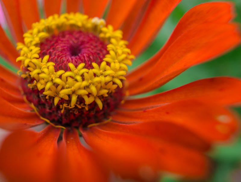180820 Gramamma's Flowers IMG_2993 s