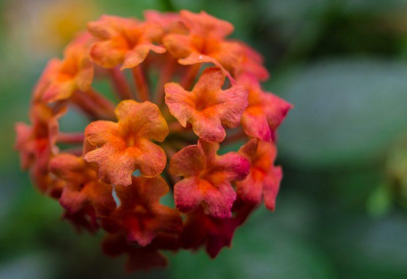 180820 Gramamma's Flowers IMG_3003 s