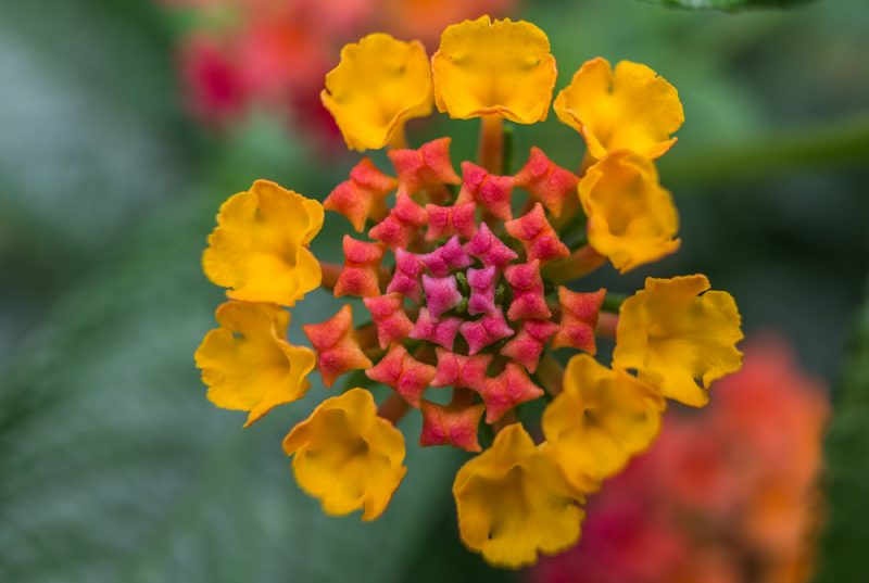 180820 Gramamma's Flowers IMG_3012 s
