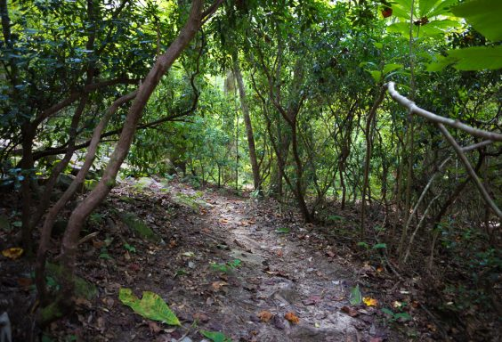 180823 Sights Along Dunnavant Valley Trail IMG_3644 s