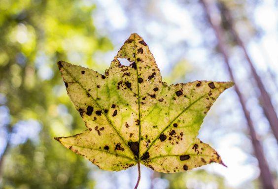 180903 Leaves of Tannehill IMG_4077 s