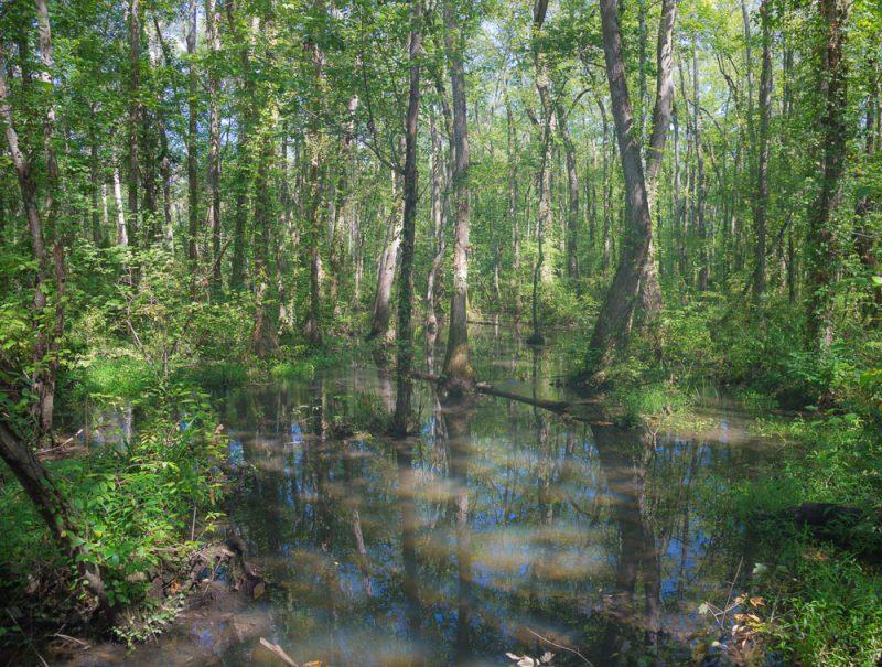 180914 Ebenezer Swamp IMG_4935 s