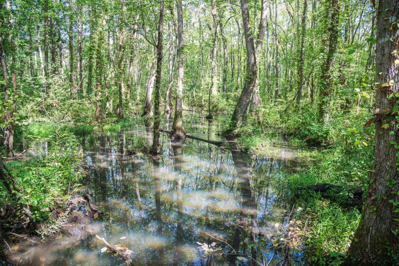 180914 Ebenezer Swamp IMG_4939 s