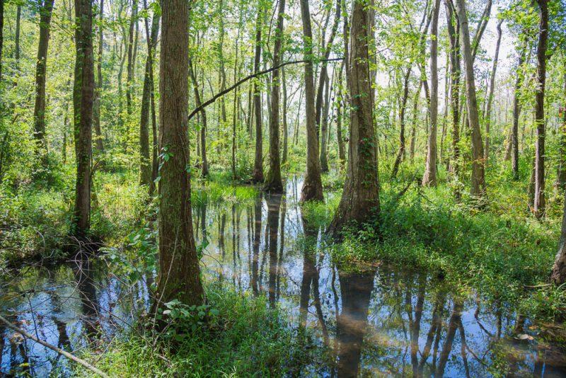 180914 Ebenezer Swamp IMG_4947 s