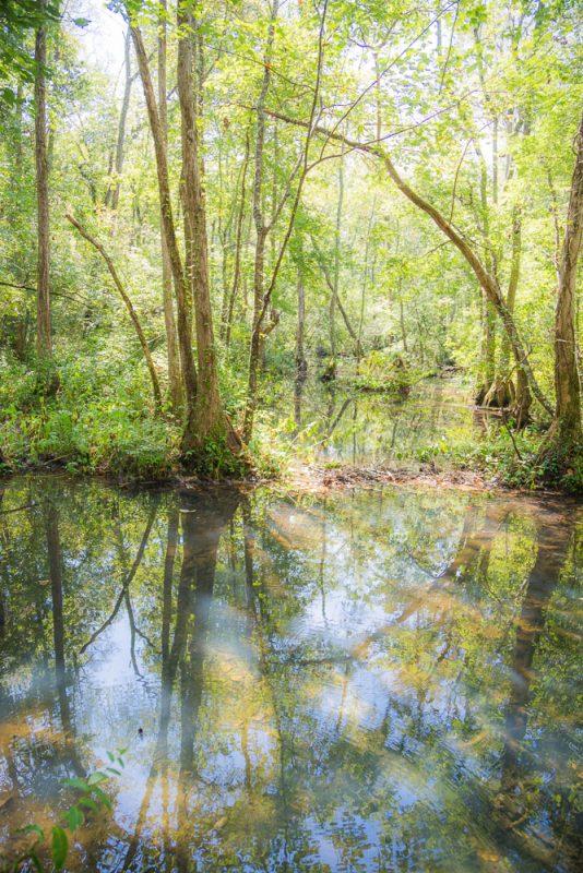 180914 Ebenezer Swamp IMG_4965 s