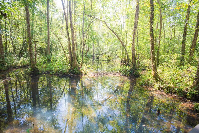 180914 Ebenezer Swamp IMG_4975 s