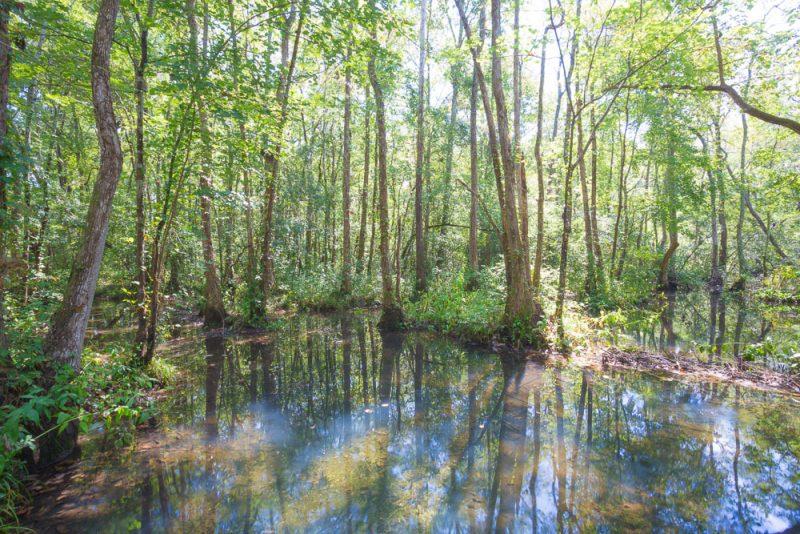 180914 Ebenezer Swamp IMG_4980 s