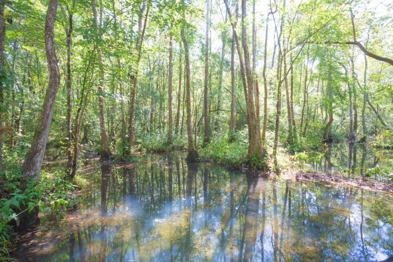 180914 Ebenezer Swamp IMG_4983 s