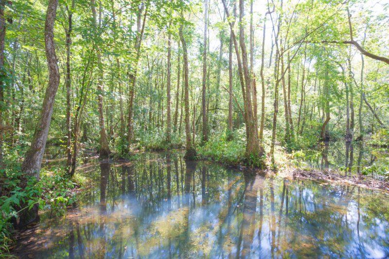 180914 Ebenezer Swamp IMG_4991 s