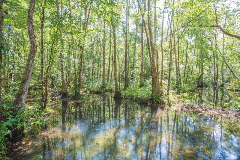 180914 Ebenezer Swamp IMG_4992 s