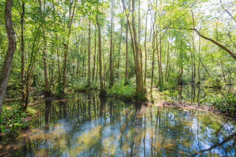 180914 Ebenezer Swamp IMG_4995 s