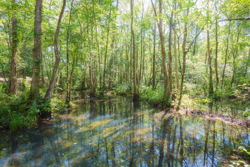 180914 Ebenezer Swamp IMG_5001 s