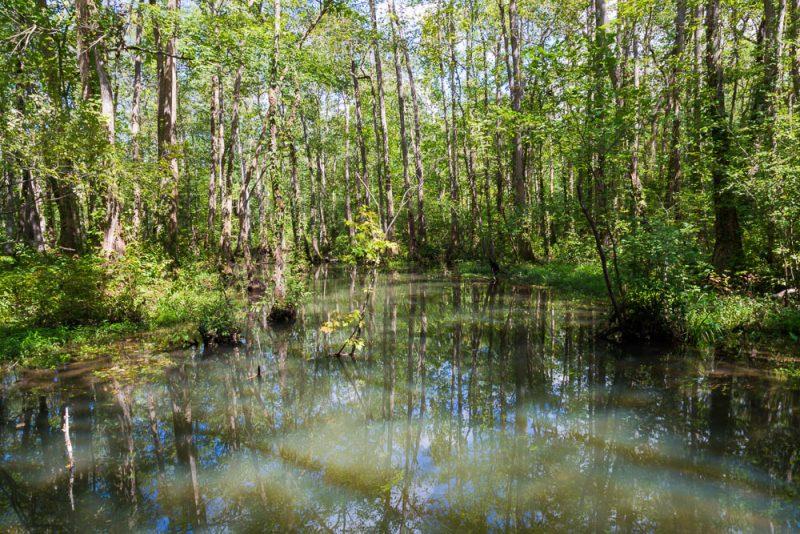 180914 Ebenezer Swamp IMG_5072 s