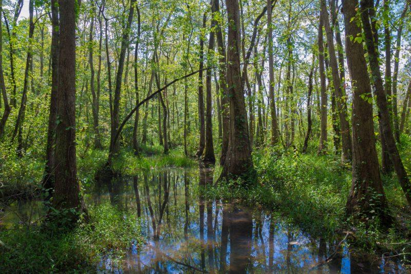 180914 Ebenezer Swamp IMG_5080 s