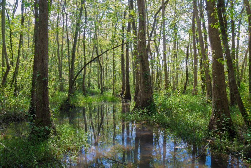 180914 Ebenezer Swamp IMG_5081 s