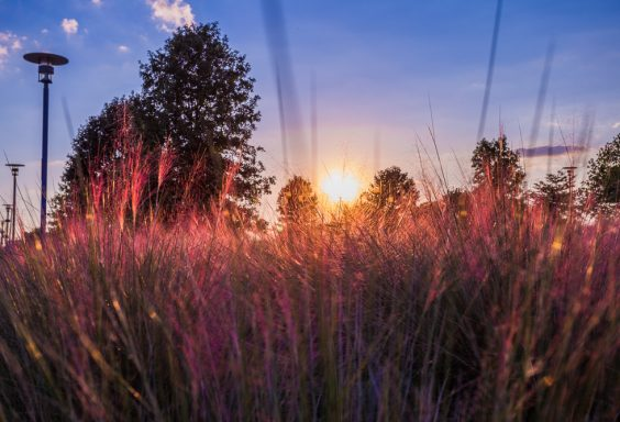 180920-through-the-pink-reeds-at-railroad-park-IMG_5288 s