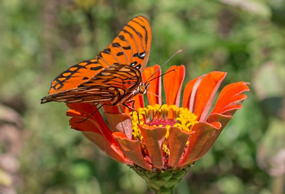 181003-Butterfly-Lunch-IMG_6193 s