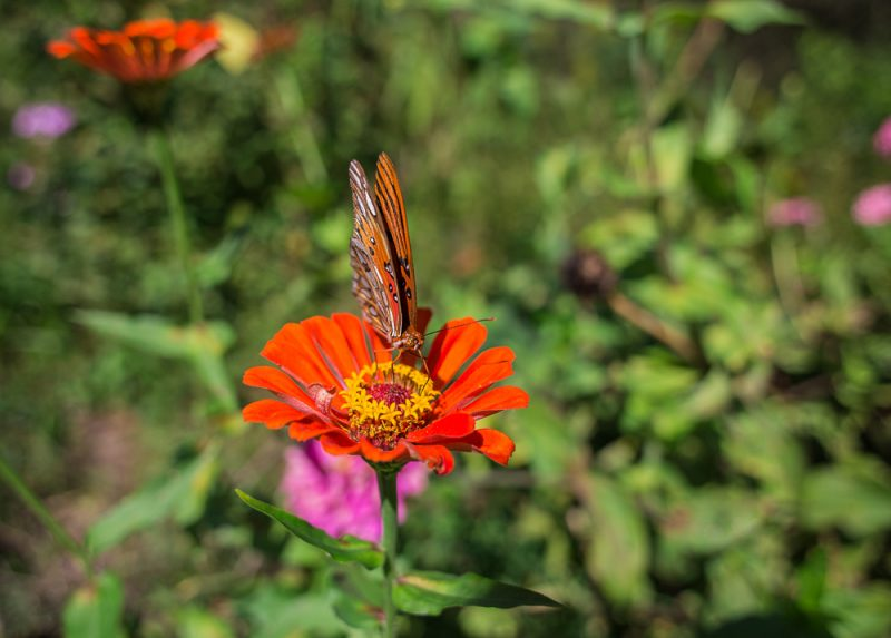 181003-Butterfly-Lunch-IMG_6204 s