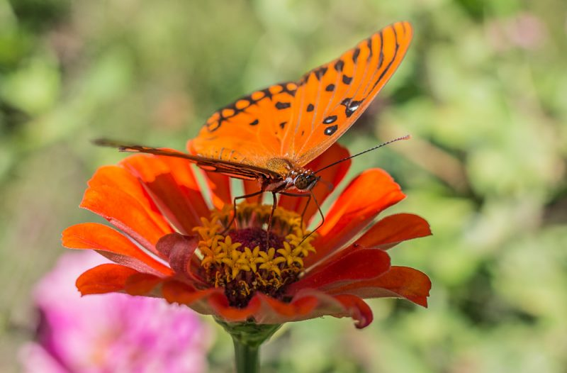 181003-Butterfly-Lunch-IMG_6209 s