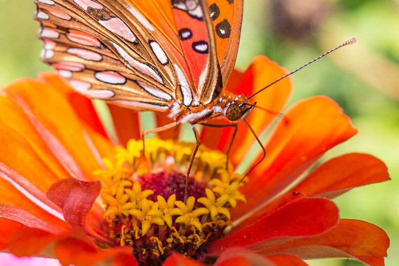 181003-Butterfly-Lunch-IMG_6210 s