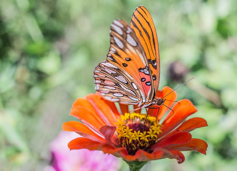181003-Butterfly-Lunch-IMG_6211 s