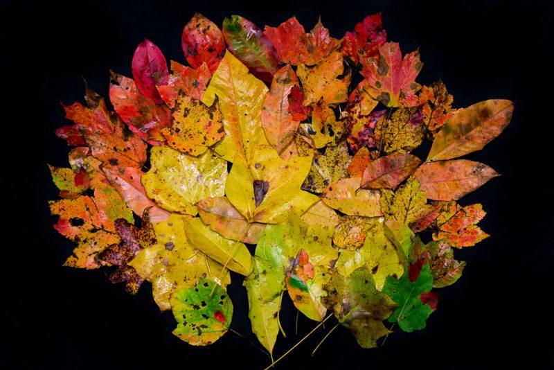181027-Leaves-of-Dunnavant-Valley-IMG_8715 S