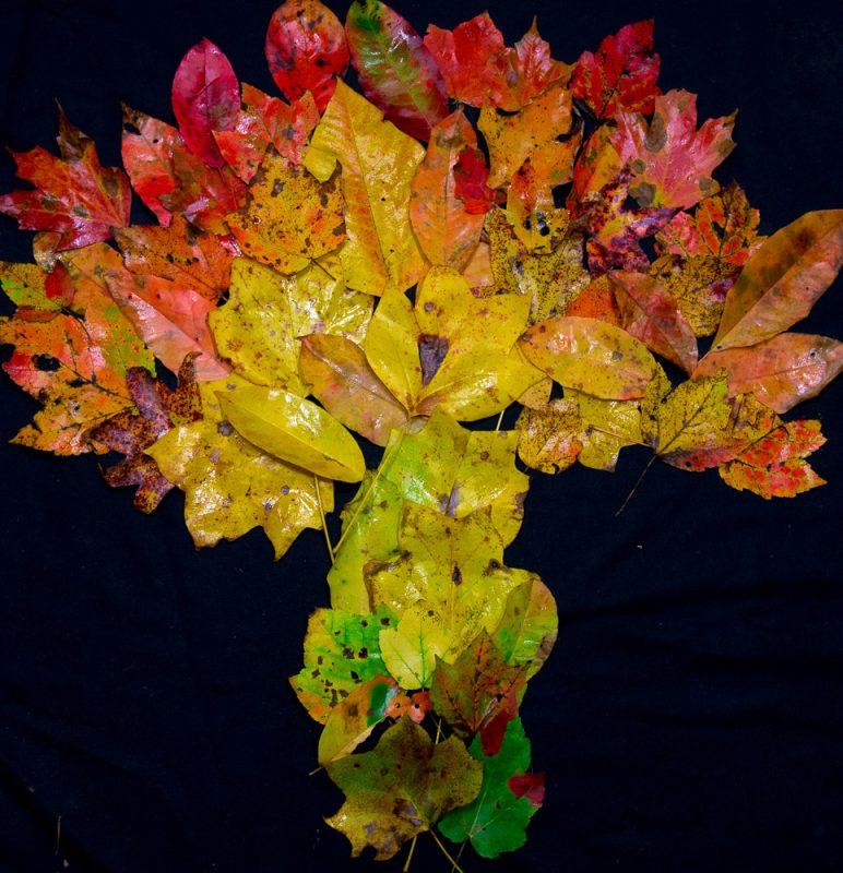 181027 Leaves of Dunnavant ValleyIMG_8684 S
