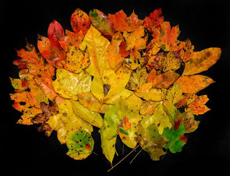 181027-Leaves-of-Dunnavant-ValleyIMG_8717 S