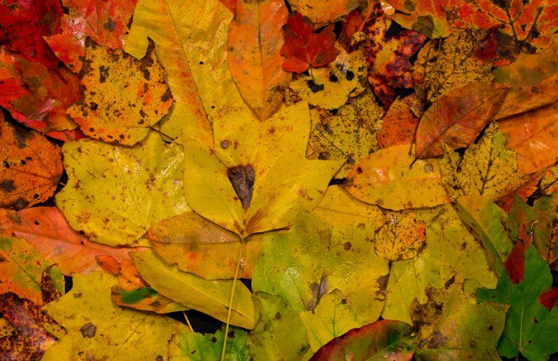 181027 Leaves of Dunnavant ValleyIMG_8751 S