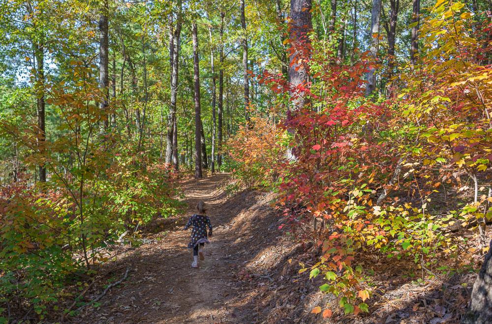 181029 Oak Mountain Fal Hike IMG_8945 S